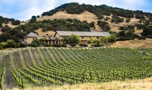 vineyard-1096841_960_720